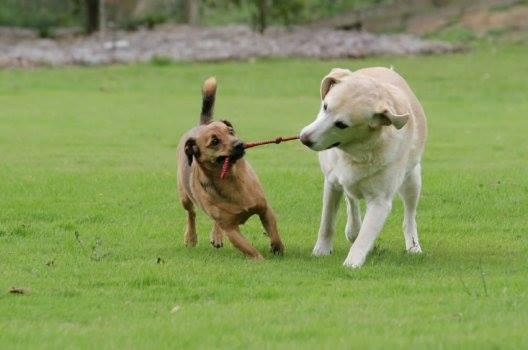 hundar-som-drar-at-olika-hall